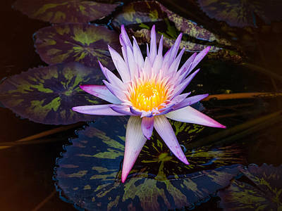 Photograph - Zen Blossoms by Robin Zygelman