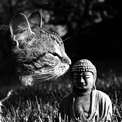 Zen Cat Black And White- Photography By Linda Woods Art Print by Linda Woods
