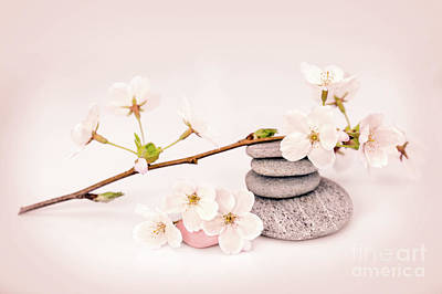 Tree Buds Photograph - Zen Cherry Blossom by Delphimages Photo Creations