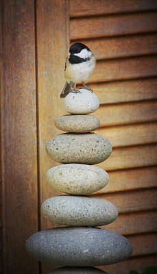 Photograph - Zen Chickadee by Heidi Hermes