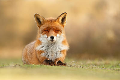 Vixen Photograph - Zen Fox 3.0 by Roeselien Raimond