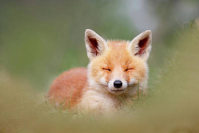 Child Photograph - Zen Fox Series- Happy Baby Fox by Roeselien Raimond