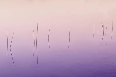 Photograph - Zen Reeds  by Expressive Landscapes Nature Photography