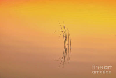 Photograph - Zen Reflection At Sunset by Claudia M Photography