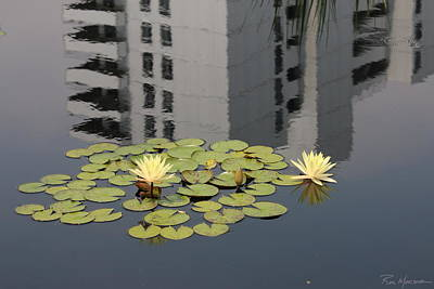 Photograph - Zen Reflection by Ron Monsour