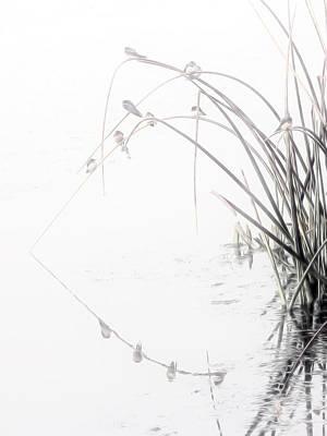 Zen Streamside Art Print