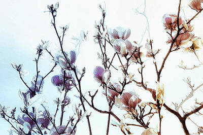 Art Print featuring the photograph Zen Thoughts by Elaine Manley
