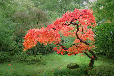 Photograph - Zen Tree by Lori Grimmett