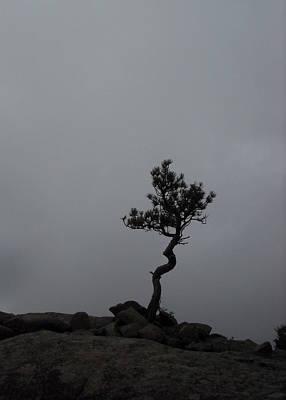 Mark Wagner Wall Art - Photograph - Zen Tree by Mark Wagner