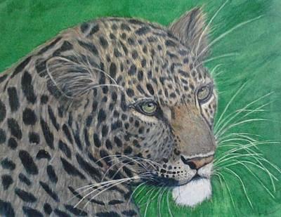 Cheetah Drawing - Zeus by Lori Lee