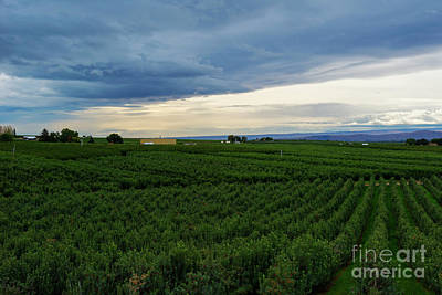 Photograph - Zillah Orchard View by Mike Dawson