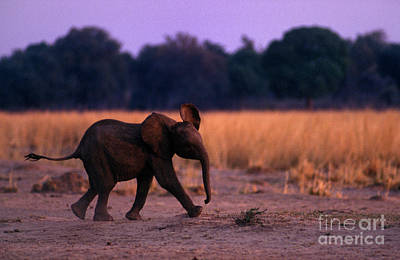 Photograph - Zimbabwe_63-15 by Craig Lovell