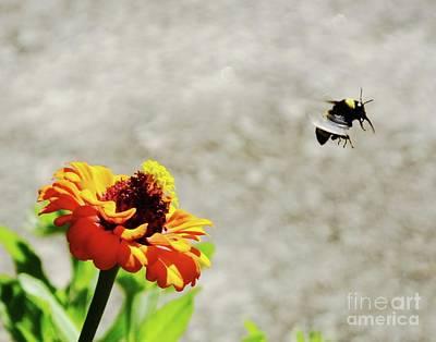 Photograph - Zinnia 52 He Bee Leaving by Lizi Beard-Ward