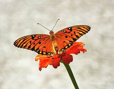 Photograph - Zinnia 73   Fritillary by Lizi Beard-Ward
