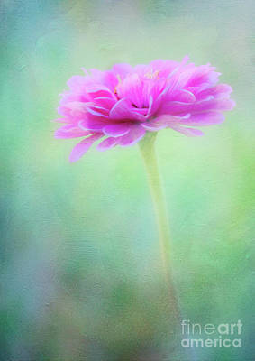 Photograph - Painted Pink Zinnia by Anita Pollak