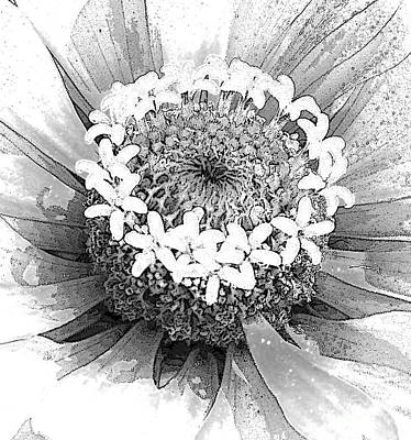 Photograph - Zinnia, Black And White by Jeanette French