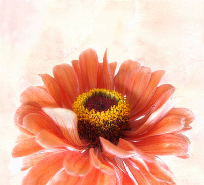 Photograph - Zinnia Bright by Louise Kumpf