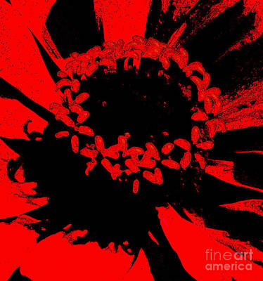 Photograph - Zinnia Crown by Jeanette French