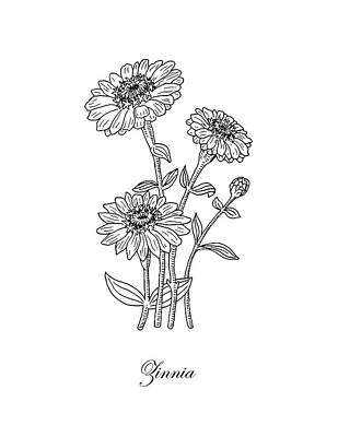 Drawing - Zinnia Flower Botanical Drawing  by Irina Sztukowski