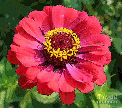 Photograph - Zinnia by Jeanette French