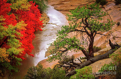 Flooding Photograph - Zion After The Flood by Inge Johnsson