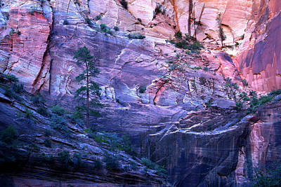 Photograph - Zion Canyon Wall by David Chasey