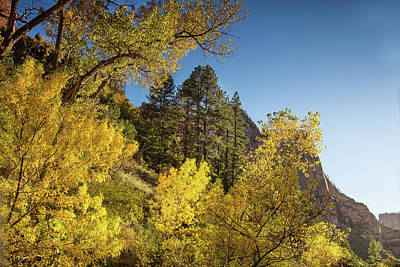 Photograph - Zion Fall Colors by Kunal Mehra
