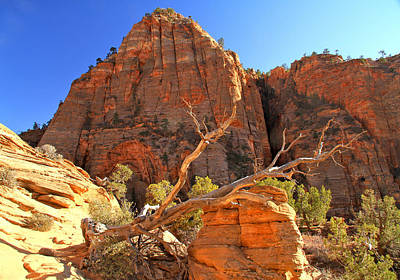 Photograph - Zion High Country by Ed  Riche