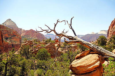 Photograph - Zion Hike 1 View 4 by Robert Meyers-Lussier