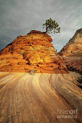 Pinion Photograph - Zion National Park by Martin Williams