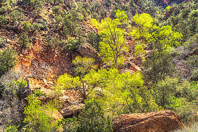 Photograph - Zion National Park Small Tributary Of The Virgin River by Roger Passman
