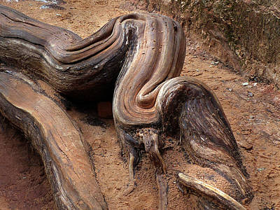 Photograph - Zion Np Tree Root  by Jeff Brunton