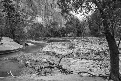 Photograph - Zion Valley And Tree by John McGraw