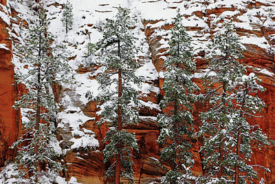 Photograph - Zion's Red And Green by Daniel Woodrum