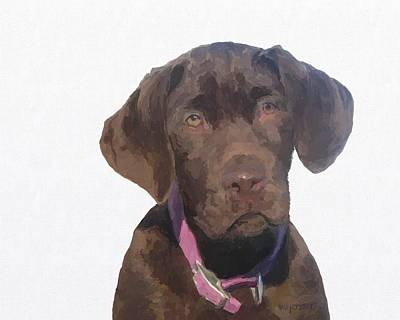 Chocolate Lab Digital Art - Zippy As A Pup by Holly Pottinger