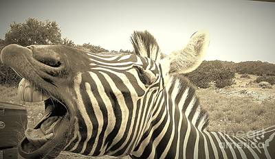 Photograph - Zippy Zebra by Brigitte Emme