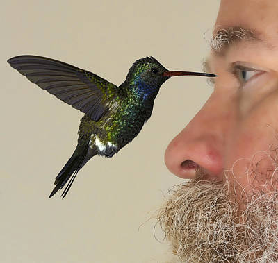 Broadbilled Hummingbirds Photograph - Zombie Hummingbird Attack Caught On Camera by Gregory Scott