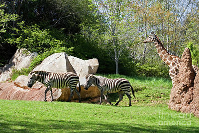 Photograph - Zoo Animals by Jill Lang
