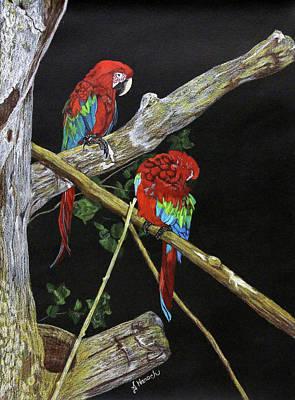 Macaw Drawing - Zoo Birds by Jodi Harsch
