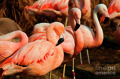 Mixed Media - Zoo Flamingos by Wilma Birdwell