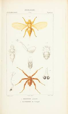 Zoological Atlas Art Print