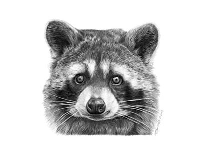 Drawing - 046 Zorro The Raccoon by Abbey Noelle