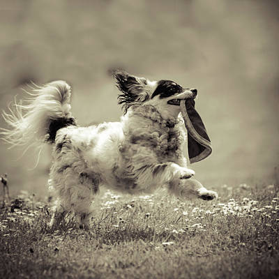 Photograph - Zorro The Super Dog by Anna Beaudry