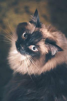 Photograph - Zsa Zsa The Cat by Viviana  Nadowski
