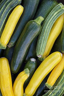 Zucchini Harvest Art Print by Tim Gainey