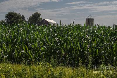 Thomas Kinkade Royalty Free Images - 0329 - Above the Corn on Piersonville Road Royalty-Free Image by Sheryl L Sutter