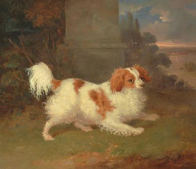 Painting - A Blenheim Spaniel by William Webb