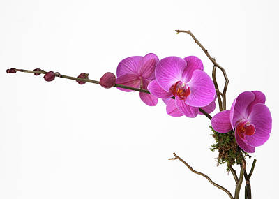 Branch Photograph - A Close-up Of An Orchid Branch by Nicholas Eveleigh