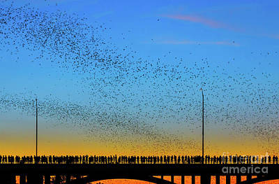 Photograph - A colony of 1.5 million Mexican free-tailed bats emerge from the by Austin Bat Tours