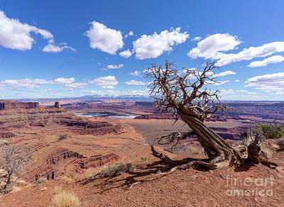 Photograph - A Gnarled Juniper Tree, Salt Evaporation Ponds And The La Sal Mo by William Kuta